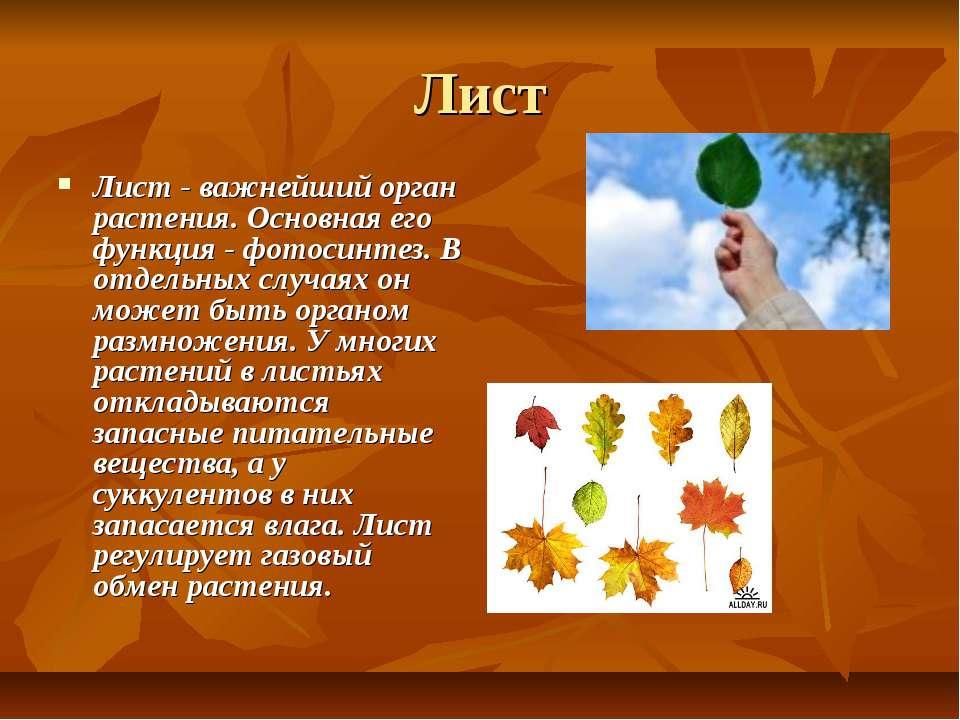 Лист Лист - важнейший орган растения. Основная его функция - фотосинтез. В от...