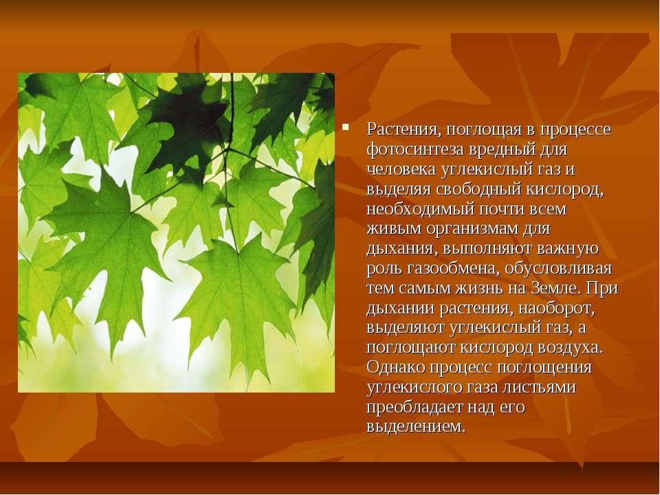 Растения, поглощая в процессе фотосинтеза вредный для человека углекислый газ...