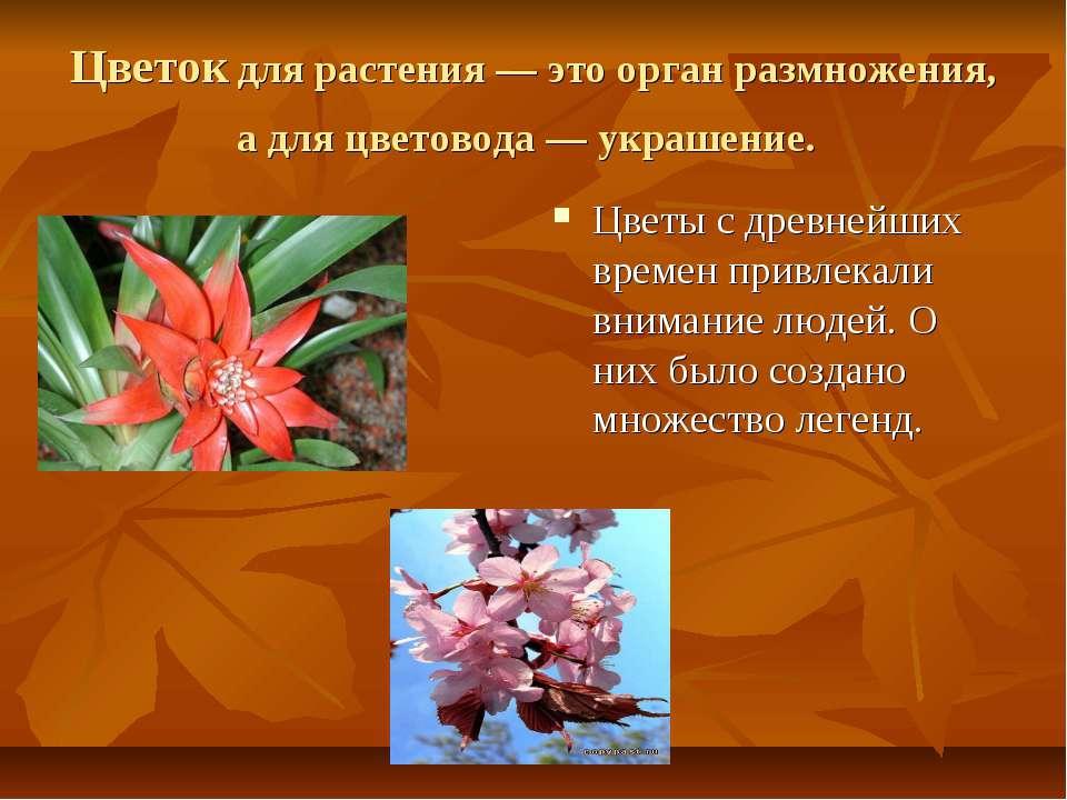 Цветок для растения — это орган размножения, а для цветовода — украшение. Цве...