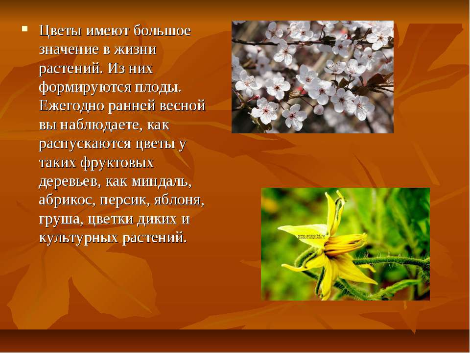 Цветы имеют большое значение в жизни растений. Из них формируются плоды. Ежег...