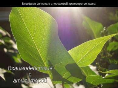 Биосфера связана с атмосферой круговоротом газов.