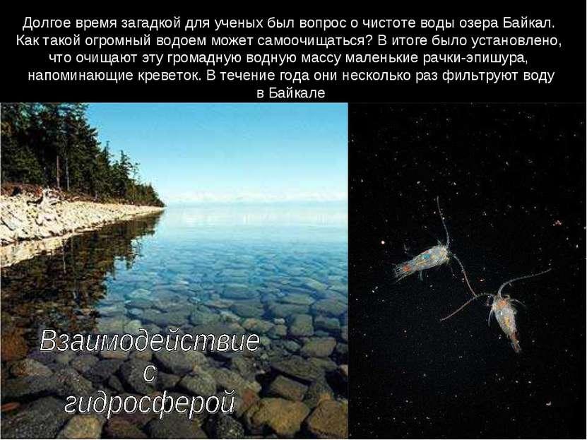 Долгое время загадкой для ученых был вопрос о чистоте воды озера Байкал. Как ...