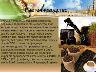 Ведущей отраслью сельского хозяйства Бразилии является растениеводство. Оно х...