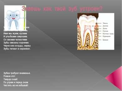 Знаешь как твой зуб устроен? У зубов видны коронки Цвета молока буренки. Ими ...