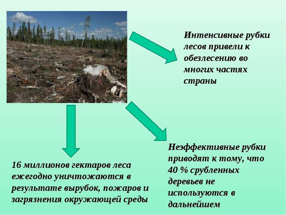 Интенсивные рубки лесов привели к обезлесению во многих частях страны 16 милл...