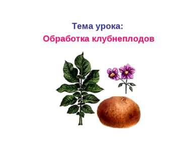 Тема урока: Обработка клубнеплодов