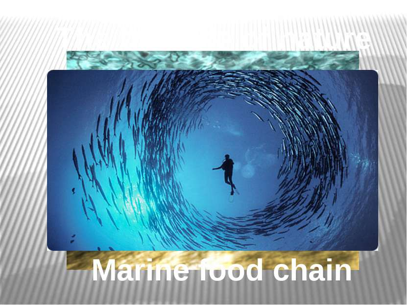 Marine food chain The balance of nature