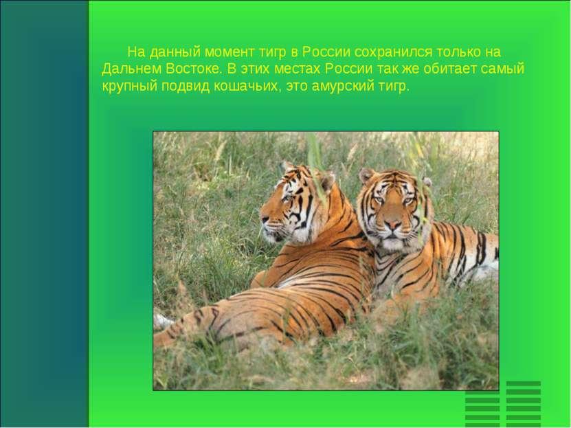 На данный момент тигр в России сохранился только на Дальнем Востоке. В этих м...