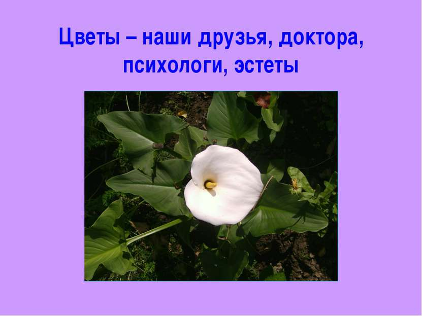 Цветы – наши друзья, доктора, психологи, эстеты