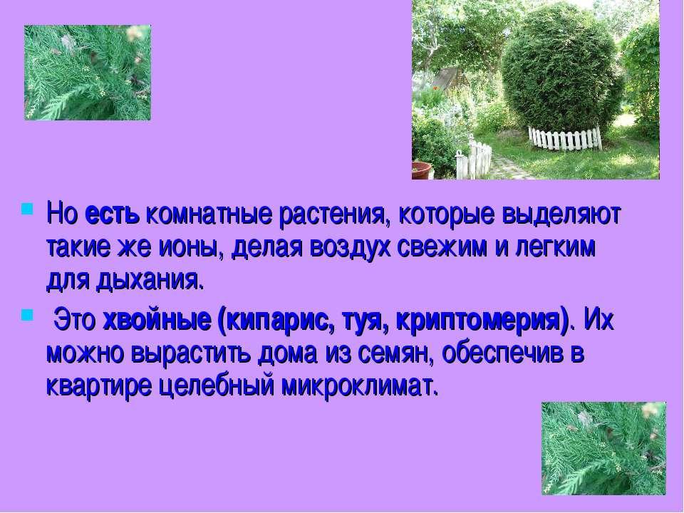 Но есть комнатные растения, которые выделяют такие же ионы, делая воздух свеж...