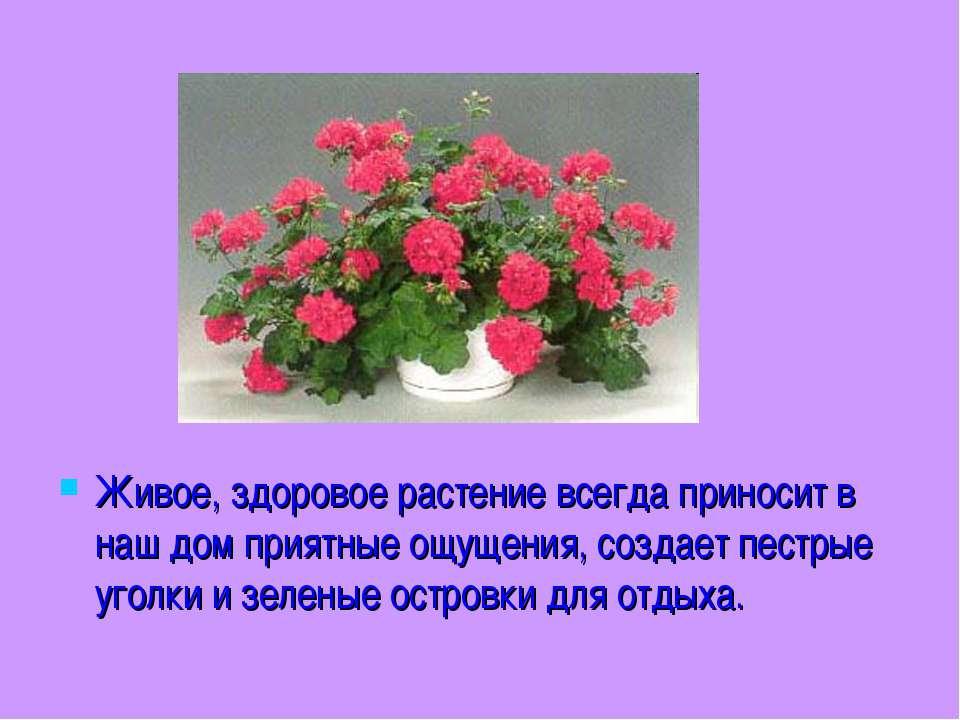 Живое, здоровое растение всегда приносит в наш дом приятные ощущения, создает...