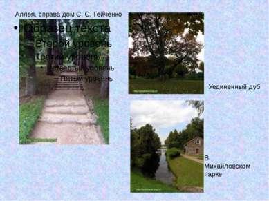 Аллея, справа дом С. С. Гейченко В Михайловском парке Уединенный дуб