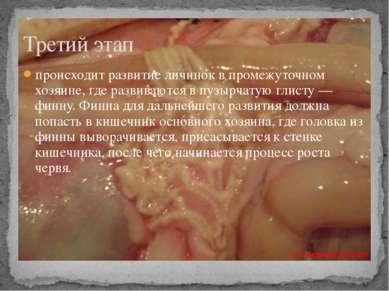 происходит развитие личинок в промежуточном хозяине, где развиваются в пузырч...