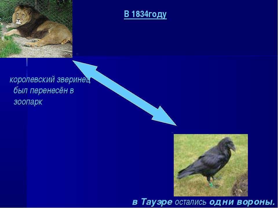 королевский зверинец был перенесён в зоопарк в Тауэре остались одни вороны. В...