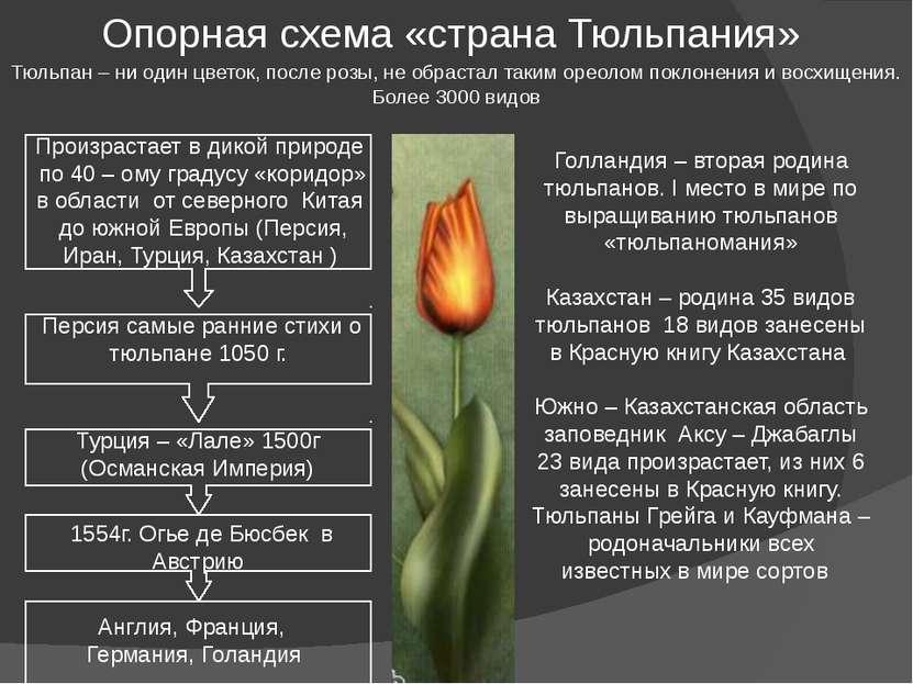 Опорная схема «страна Тюльпания» Тюльпан – ни один цветок, после розы, не обр...