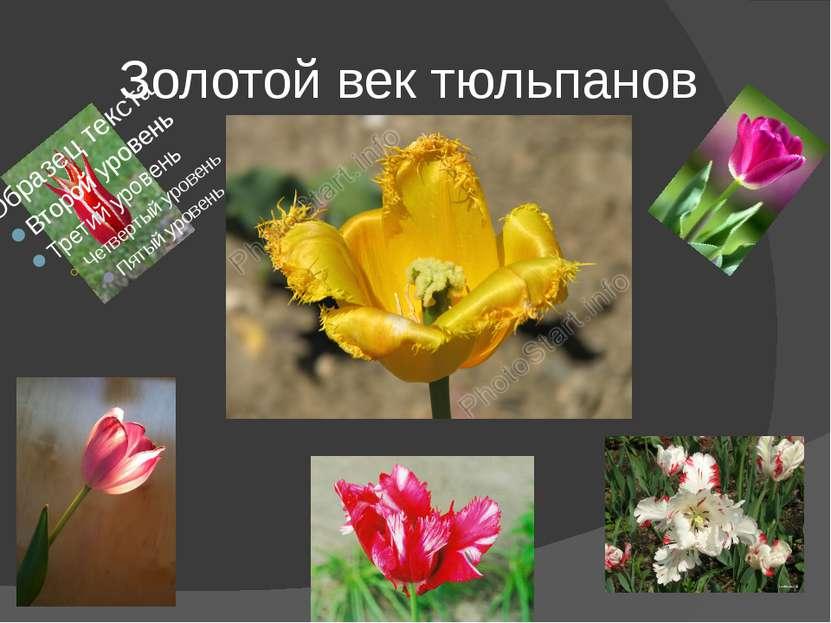 Золотой век тюльпанов