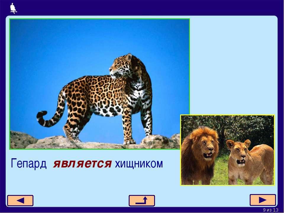 Гепард является хищником * из 13