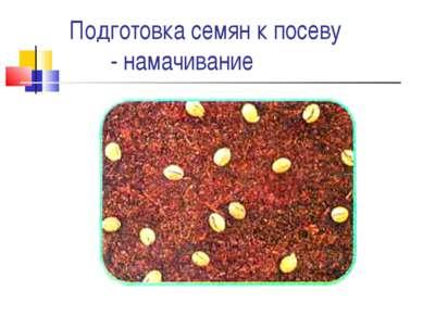 Подготовка семян к посеву - намачивание