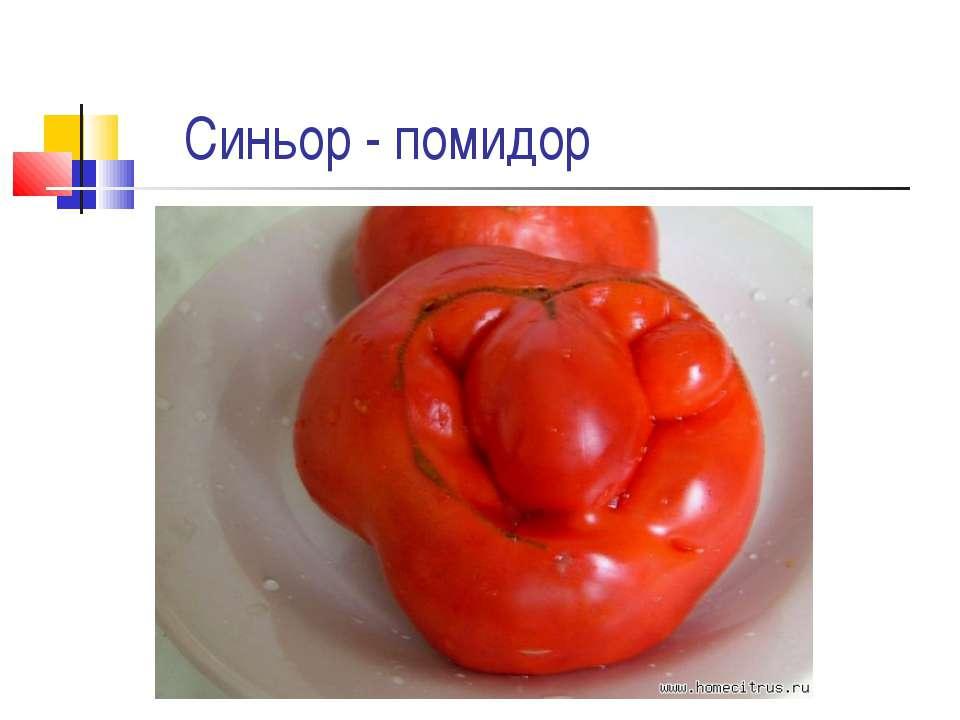 Синьор - помидор