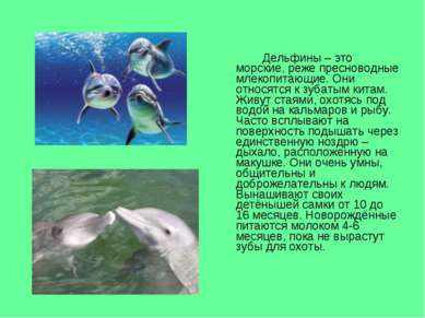 Дельфины – это морские, реже пресноводные млекопитающие. Они относятся к зуба...