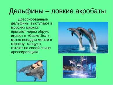 Дельфины – ловкие акробаты Дрессированные дельфины выступают в морских цирках...