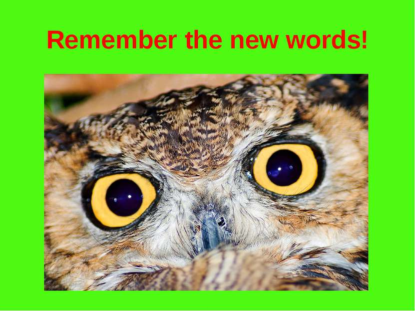 Remember the new words!
