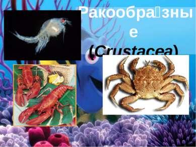 Ракообра зные (Crustacea)