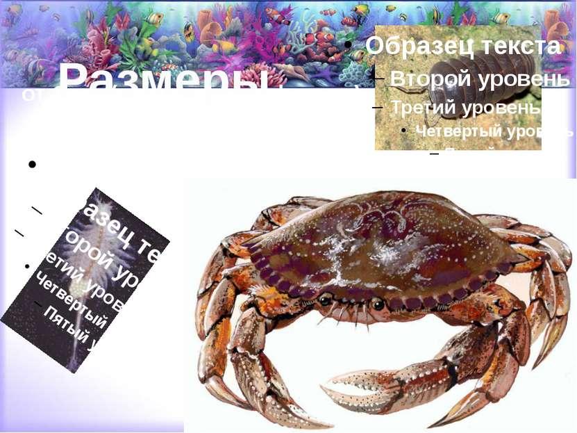 Размеры от 1 мм (планктонные формы) до 80 см в длину (размах ног — до 2 метров).