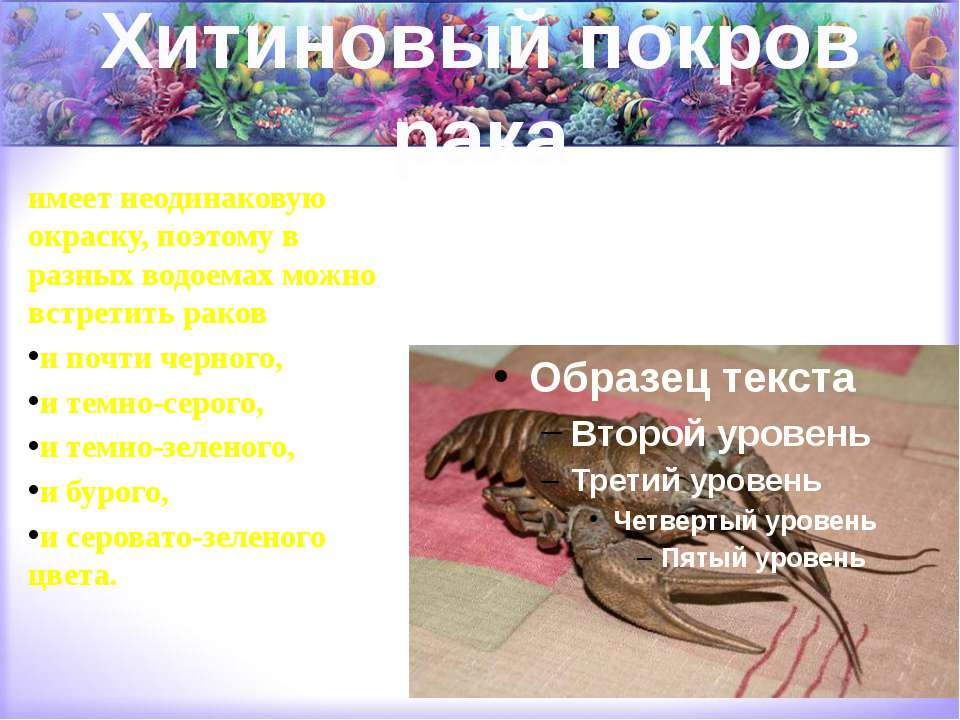Хитиновый покров рака имеет неодинаковую окраску, поэтому в разных водоемах м...
