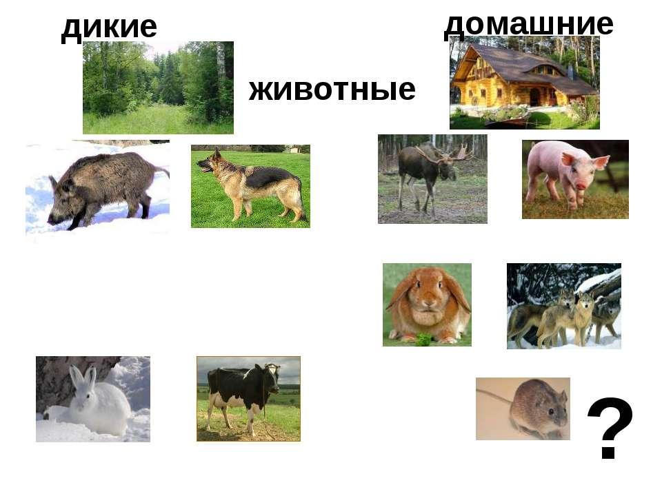 дикие животные домашние ?