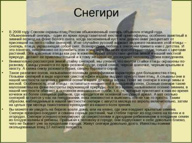 Снегири В 2008 году Союзом охраны птиц России обыкновенный снегирь объявлен п...