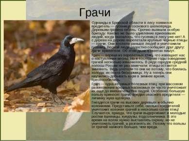 Грачи Однажды в Брянской области в лесу появился вредитель — гусеница сосново...