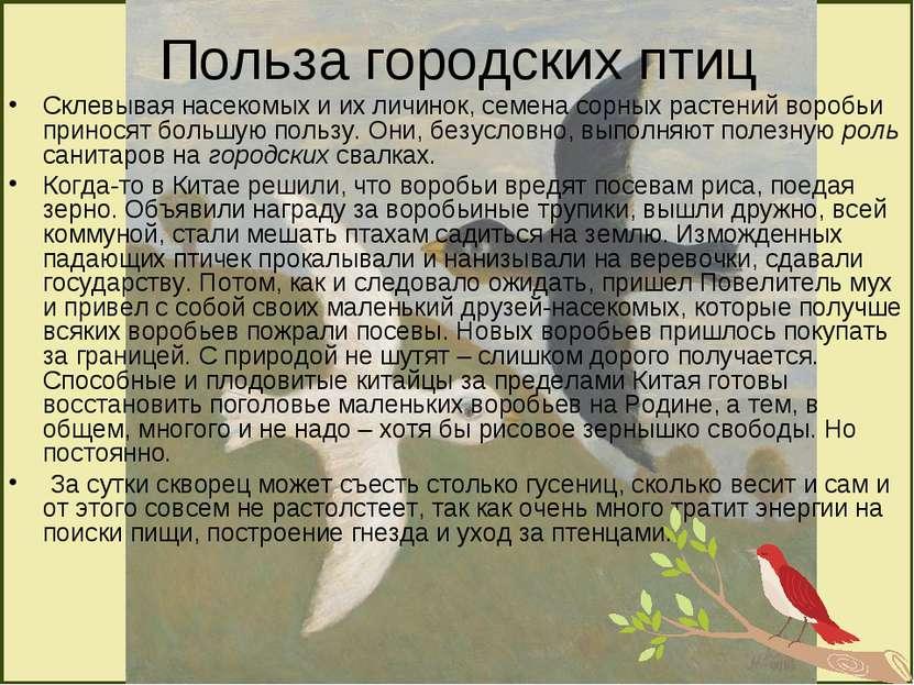 Польза городских птиц Склевывая насекомых и их личинок, семена сорных растени...