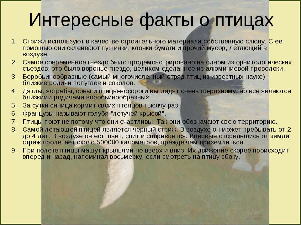 Интересные факты о птицах Стрижи используют в качестве строительного материал...