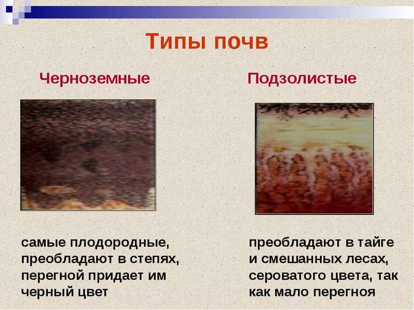 Типы почв Черноземные Подзолистые самые плодородные, преобладают в степях, пе...