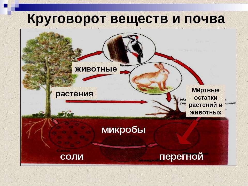 Круговорот веществ и почва соли микробы перегной животные растения Мёртвые ос...
