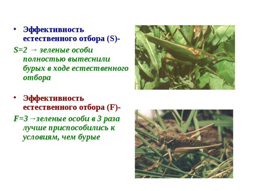 Эффективность естественного отбора (S)- S=2 → зеленые особи полностью вытесни...