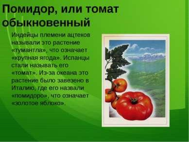 Помидор, или томат обыкновенный Индейцы племени ацтеков называли это растение...