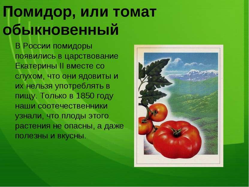 Помидор, или томат обыкновенный В России помидоры появились в царствование Ек...