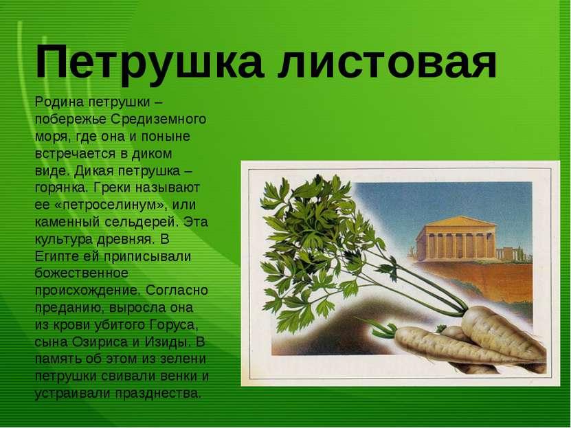 Петрушка листовая Родина петрушки – побережье Средиземного моря, где она и по...