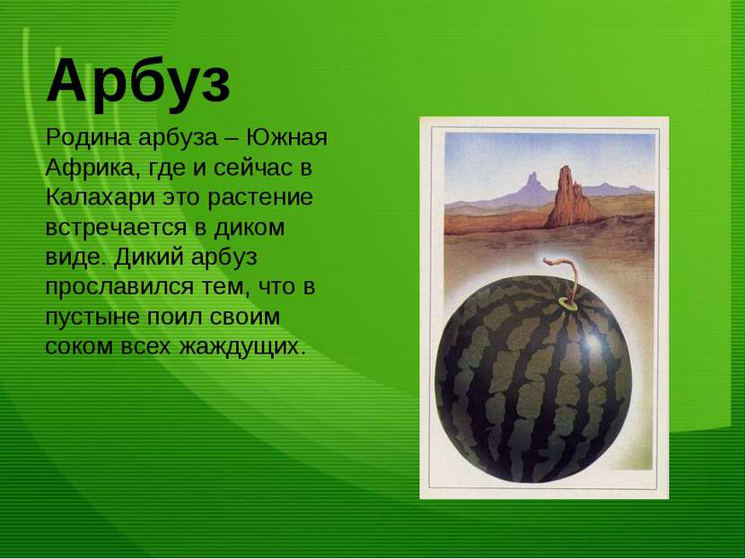 Арбуз Родина арбуза – Южная Африка, где и сейчас в Калахари это растение встр...