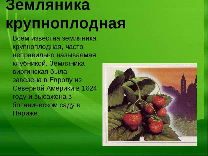 Земляника крупноплодная Всем известна земляника крупноплодная, часто неправил...