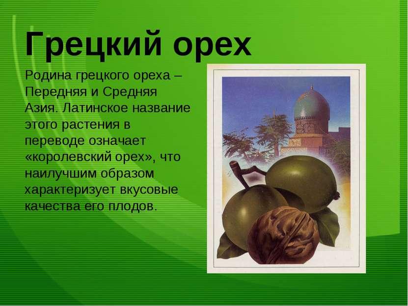 Грецкий орех Родина грецкого ореха – Передняя и Средняя Азия. Латинское назва...