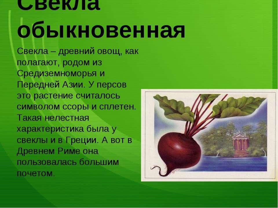 Свёкла обыкновенная Свекла – древний овощ, как полагают, родом из Средиземном...