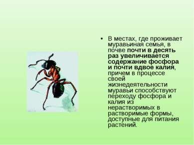 В местах, где проживает муравьиная семья, в почве почти в десять раз увеличив...