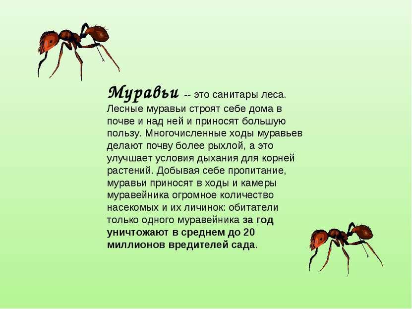 Муравьи -- это санитары леса. Лесные муравьи строят себе дома в почве и над н...