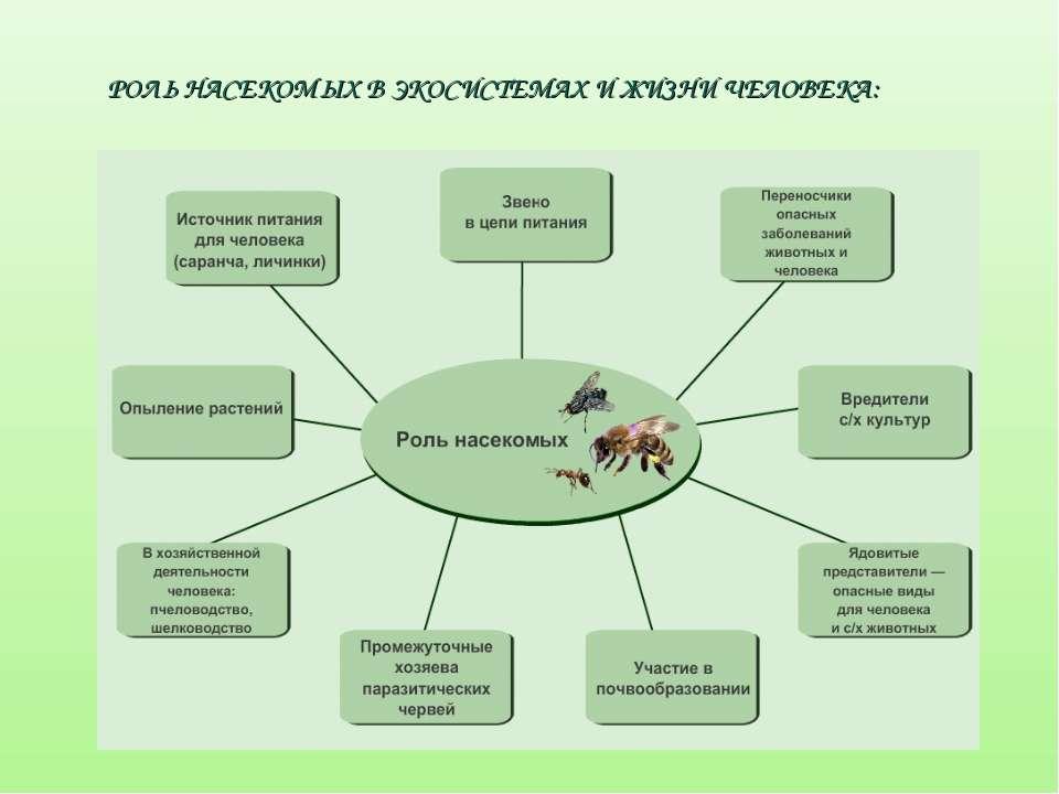 РОЛЬ НАСЕКОМЫХ В ЭКОСИСТЕМАХ И ЖИЗНИ ЧЕЛОВЕКА: