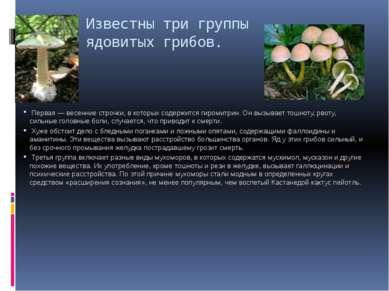 Известны три группы ядовитых грибов. Первая — весенние строчки, в которых сод...
