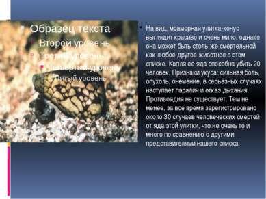 На вид, мраморная улитка-конус выглядит красиво и очень мило, однако она може...