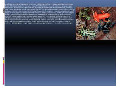 Сходный с растениями метод защиты используют лягушки-древолазы — самые ядовит...